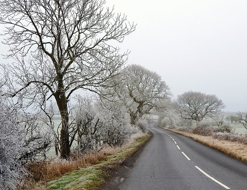 road winter yorkshire landscape fog freezingfog countryside s9 tree trees outdoor sky grass frost branches nature