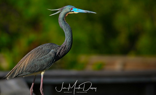 Neon Heron   by QuakerVille