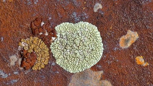 eechillington nikond7500 viewnxi mountolympus hiking utah saltlakecity patterns lichen abstract nature