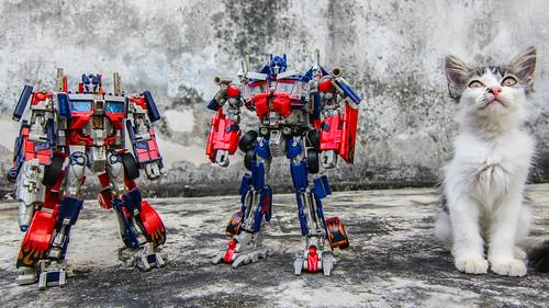 Leader-class Optimus Prime(s) & Cat