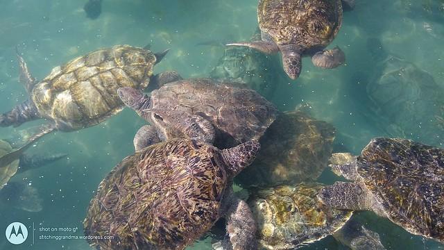 crowded in the breeding pool