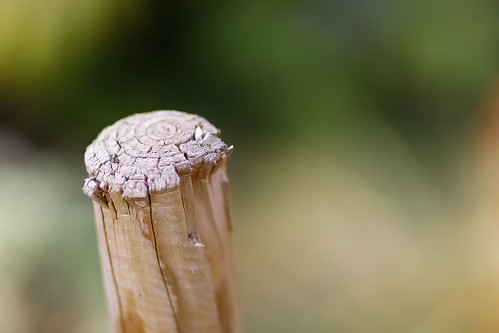 Stump   by Jyoti Mishra