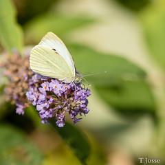 20180928_creteil_macro_papillon-2