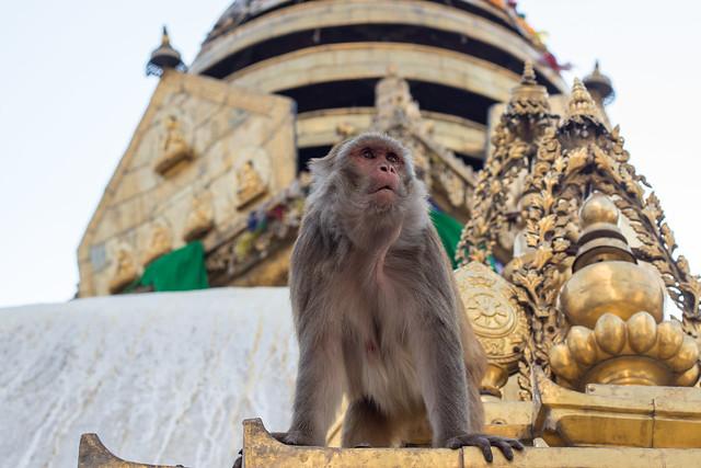 King of the Castle/Temple, Kathmandu