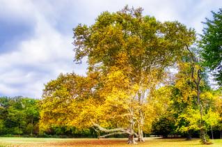Big tree Laxenburg | by heyyouphoto
