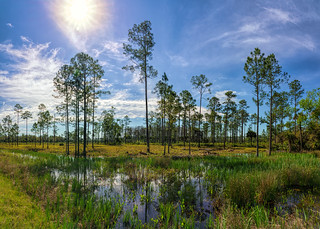 Tosahatchee wetlands | by Ed Rosack