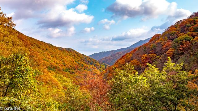 Foliage in Jirisan National Park (South Korea)