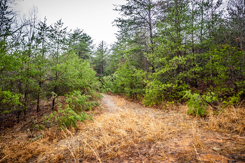 Tall Pines Preserve and South Saluda Church Cemetery-23 | by RandomConnections