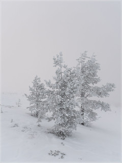 Winter Trees _93151 | by uwe_cani