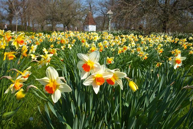 Spring @ Sissinghurst