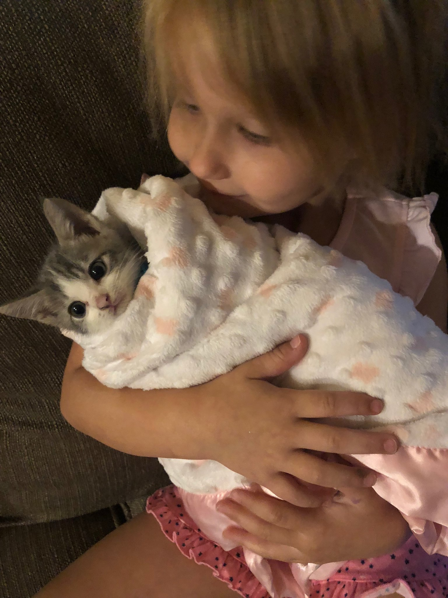 A foster kitten purrito by Anne Demmy
