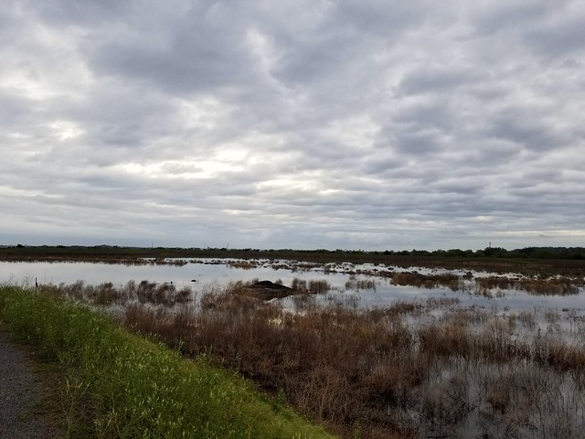 Dayson Basin. Little Marsh Island. Jacksonville FL
