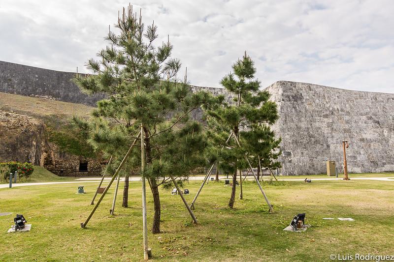 Pinos en el parque del castillo