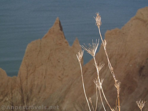 Flowers that have lost their seeds, Chimney Bluffs State Park, New York