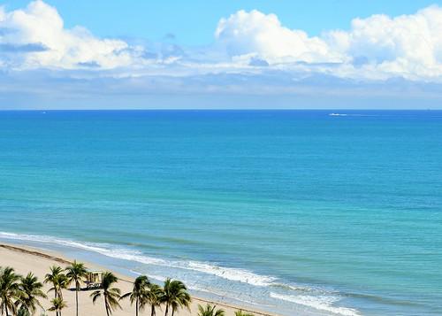 florida hollywood beach blue atlantic ocean palm trees explore