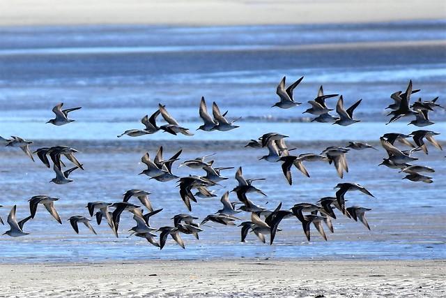 Flock of seabirds