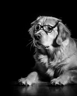 Dog Noir 13/52 | by bztraining