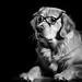 Dog Noir 13/52 by bztraining