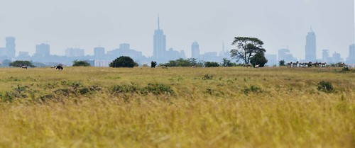 nairobi landscape skyline creatures mammals kenya nairobinationalpark wild cityscape plainszebraquagga