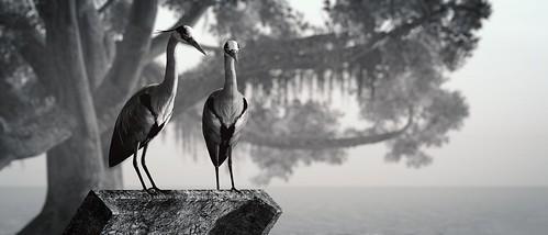 Chesapeake Bay | by αlιηα
