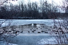 Idk which swan lake photo I like the best