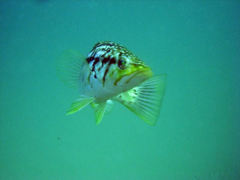 Aug 6th, 2007 Laguna Beach Diving Calif. 126