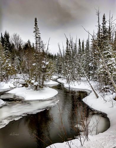 river rapidriver kalkaska cedar swamp ice flow gray skies rain drizzle fog fernridge mi michigan winter february2019