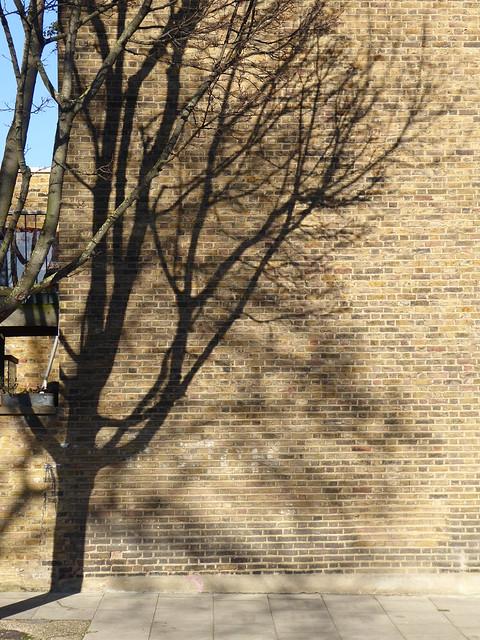 Tree Shadow, Islington, London