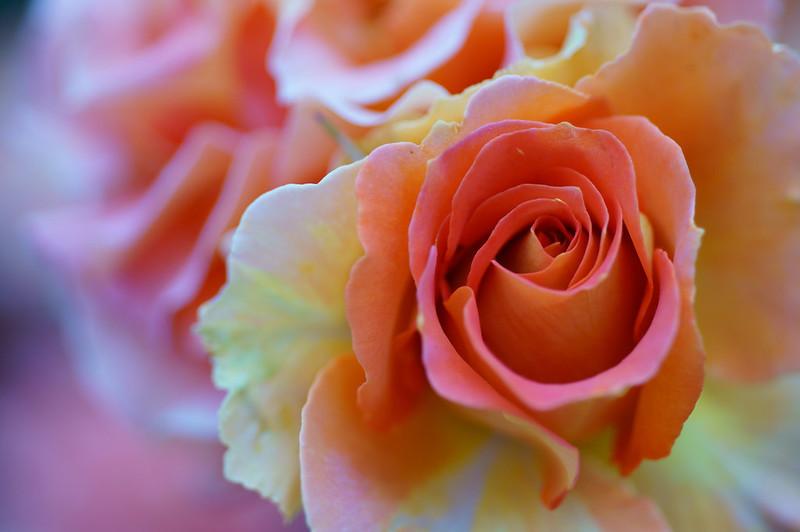 Обои макро, роза, лепестки, бутон, боке картинки на рабочий стол, раздел цветы - скачать