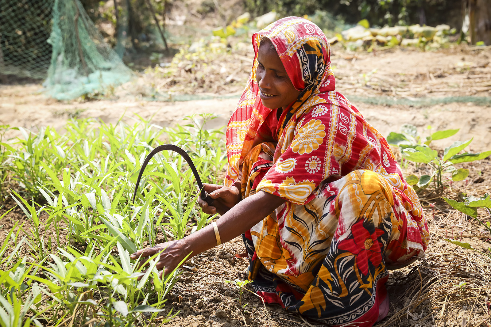 Emergency livelihood support for host communities and refugees in Bangladesh