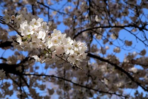 Een mooie lentedag in de Leuvense Kruidtuin (07/04/2018) | by Kristel Van Loock