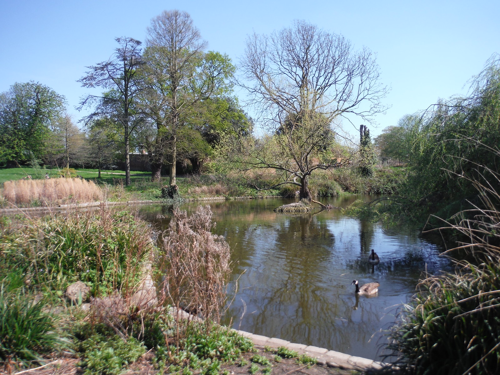 Pond 2 fed by Effra Tributary, Brockwell Park SWC Short Walk 39 - Brockwell Park (Herne Hill Circular or to Brixton)