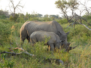 Mama and baby white rhino | by WordRidden