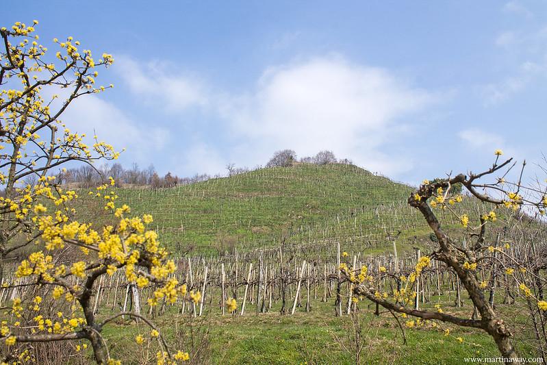 Col San Martino, Colline del Prosecco
