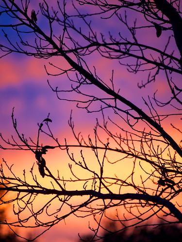 2016 balconygarden clouds plumtree sunset