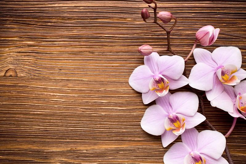 Обои wood, орхидея, pink, flowers, orchid картинки на рабочий стол, раздел цветы - скачать
