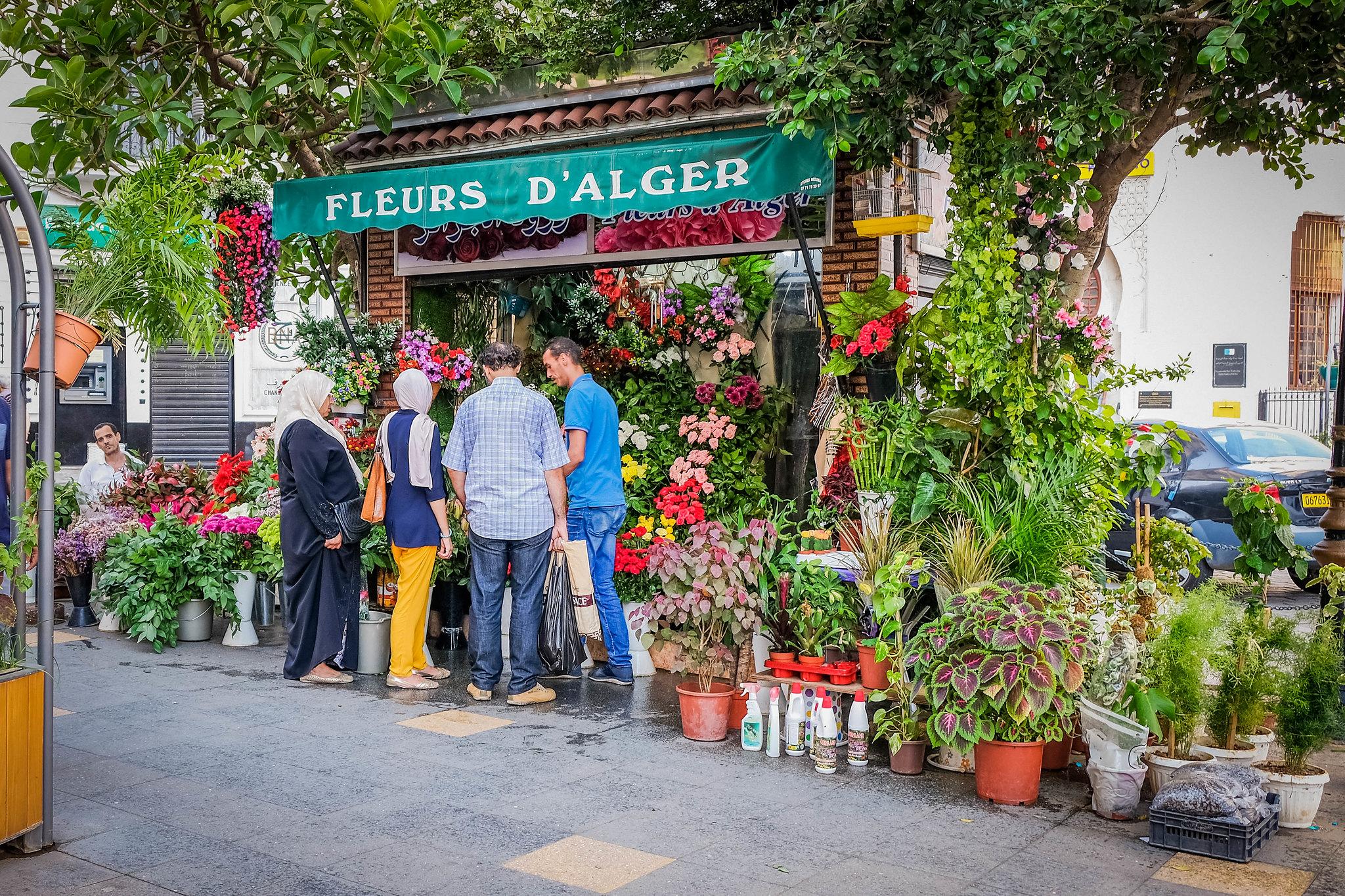 Fleurs D'Alger