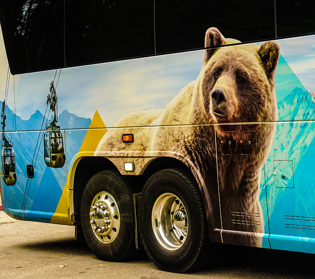A Grizzly Bear on Wheels? (Rating:2)