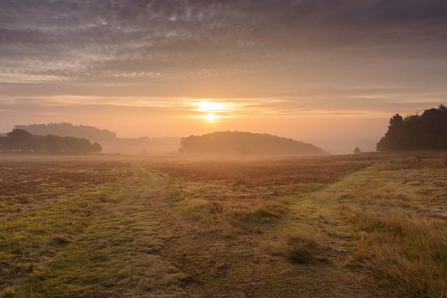 Dawn Mist at Bradgate