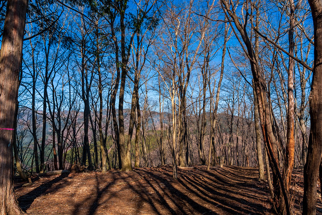 広葉樹林の向こうに有間山稜