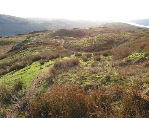 20 - A myriad little hillocks occupy this area   by samashworth2