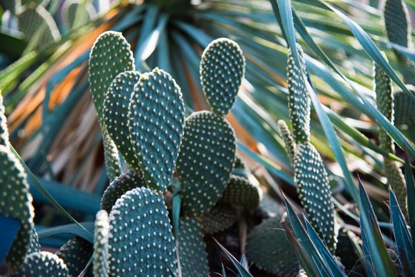 cactus rochester ny