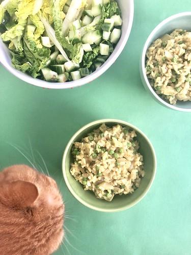 årstiderna organic vegan foodbox, food ambassador, february 2019 -