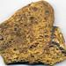 Fossiliferous sandstone (Byer Sandstone Member, Logan Formation, Lower Mississippian; east-central Ohio, USA) 1