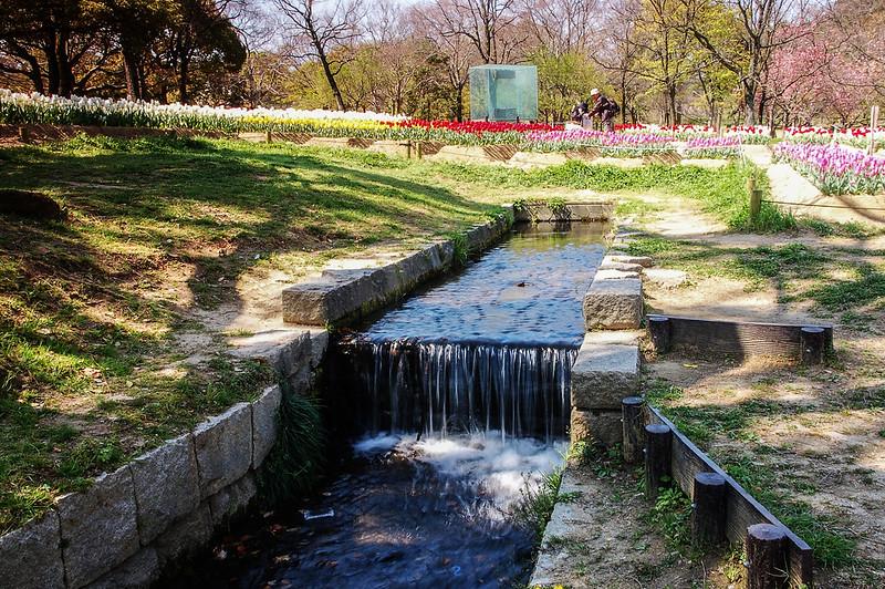 萬博公園鬱金香 (3)