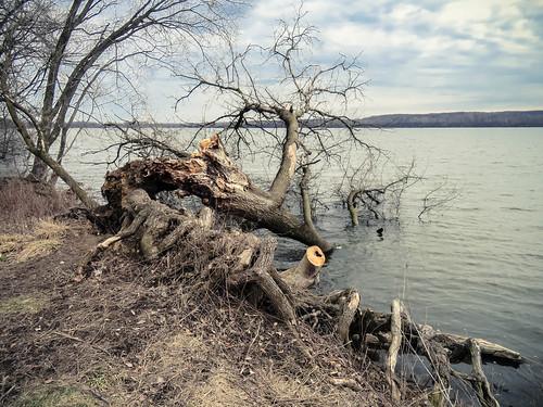 saganashkee slough march 2019 illinois tree fallen