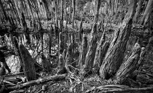 florida canon5dmkii canonef1740mmf4l landscapeimage blackbearwildernesstrail sanford