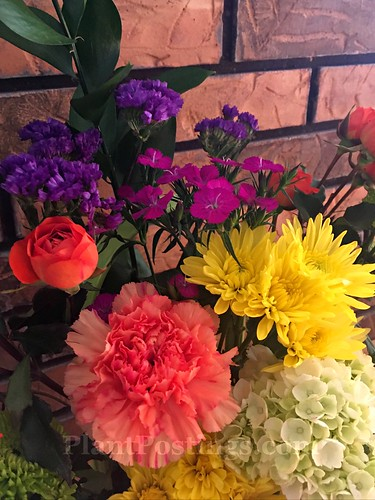 flowers in vase 2 | by PlantPostings