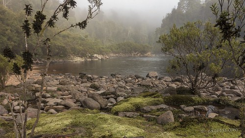 franklinriver tasmania river mist worldheritage park nationalpark wild