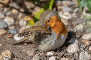 Robin | by Linda Martin Photography